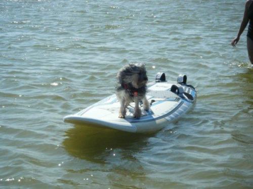 Basil Lowchen surfing Water Rescue