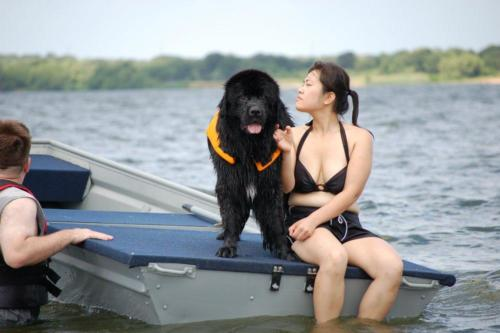 Brooke Newfie Greater Swiss Mountain Dog Water Rescue